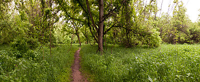 Dirt path through grass in rural forest - p555m1411138 by Christopher Winton-Stahle