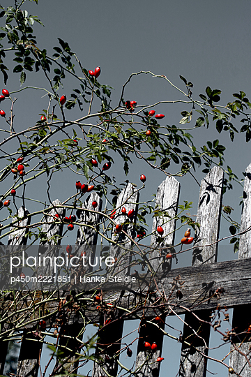Wooden fence - p450m2221851 by Hanka Steidle