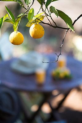 Orange tree - p958m1113159 by KL23