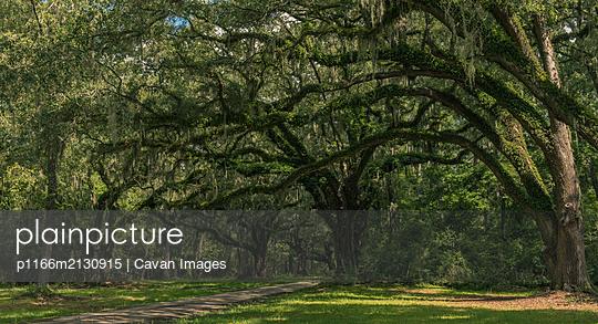 Neiuport Plantation - p1166m2130915 by Cavan Images