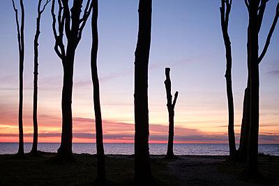 Buchenwald an der Ostsee Küste - p1600m2230761 von Ole Spata