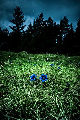 Bergenzian am Wald - p248m1425861 von BY