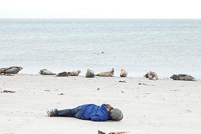 Seehunde - p249m1055106 von Ute Mans