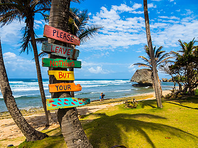 Caribbean, Barbados, Saint Joseph, Signs on palm at Bathsheba Park - p300m1460609 by Martin Moxter