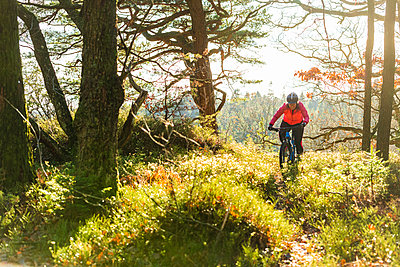 Cycling in forest - p312m2092197 by Mikael Svensson