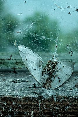 Rotten dead moth - p1228m1574838 by Benjamin Harte