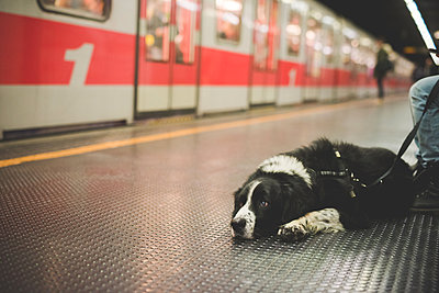 Portrait of dog lying subway station floor - p429m1027891f by Eugenio Marongiu