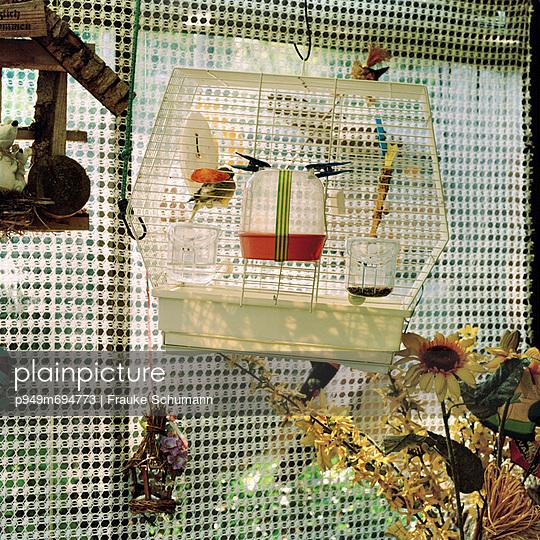Birdcage - p949m694773 by Frauke Schumann