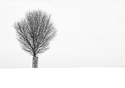 Baum im Schnee - p1256m2099743 von Sandra Jordan
