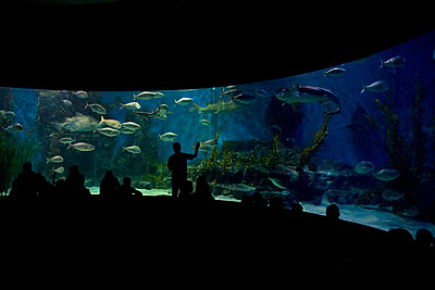 People looking at an aquarium - p3017148f by Tobias Titz