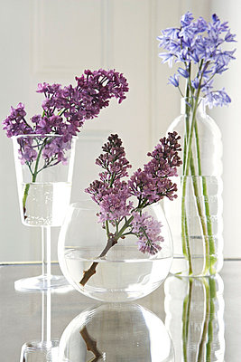 Purple lilac sprays (Syringa Vulgaris) and bluebells (Hyacinthoides non-Scripta) in glass vases - p3493149 by Jon Day