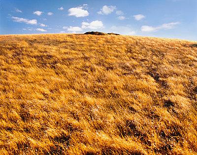 Grassy hilltop - p1125m917380 by jonlove