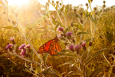 Close-up of butterfly on plants - p1166m978548f by Cavan Images