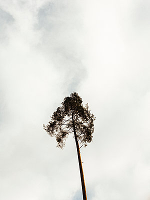 Single tree - p1177m2076540 by Philip Frowein
