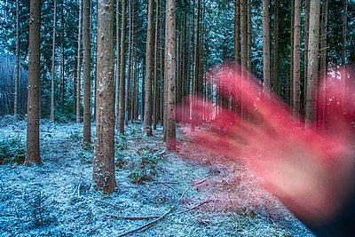 Wald - p1205m2054354 von Toni Anzenberger