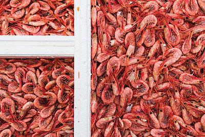 Shrimps - p312m993241f by Mikael Svensson