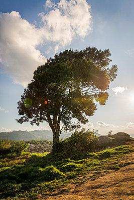 Windswept tree - p1170m1111653 by Bjanka Kadic