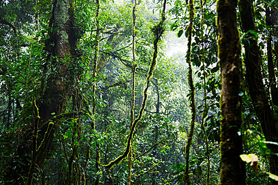 Tropical forest - p312m1470716 by Anna Kern