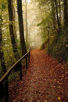 Autumnal path - p470m954784 by Ingrid Michel