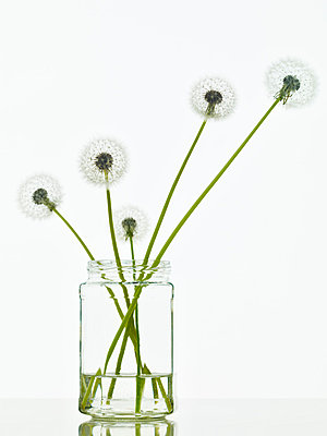 Three Dandelion flowers in an old fashioned vase - p968m658844 by roberto pastrovicchio