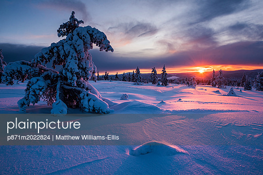 p871m2022824 von Matthew Williams-Ellis