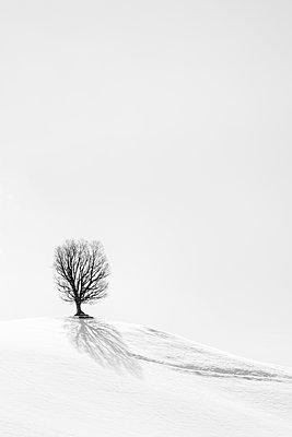 Alone - p1256m2098980 by Sandra Jordan