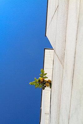 Pflanze und Gebäude - p417m900854 von Pat Meise