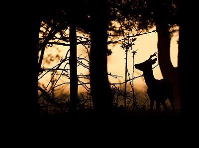 Roe deer silhouette - p1144m944036 by Wendy  Kreeftenberg