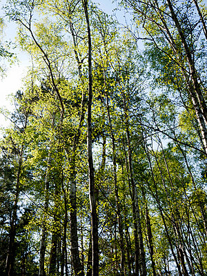Tree tops - p388m702041 by Andre