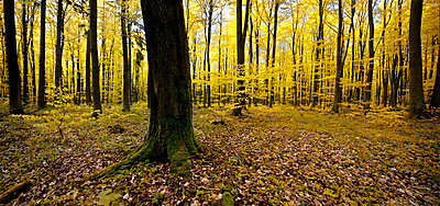 Forest - p416m991247 by Matthias Groppe
