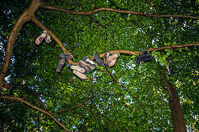 Several pairs of old trainers strung up on the branch of a tree by their laces - p1047m2210907 by Sally Mundy