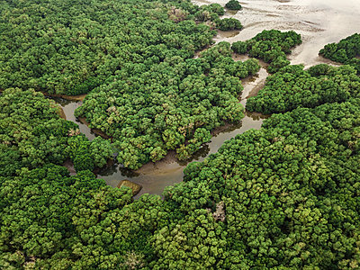 Aerial view of the mangrove forest - p1166m2111638 by Cavan Images