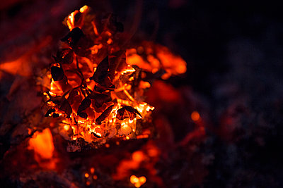 Flower in fire - p1307m2185341 by Agnès Deschamps