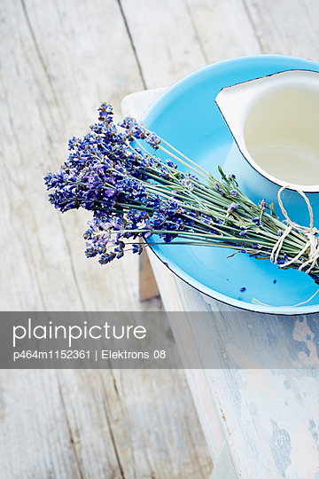 Lavendel - p464m1152361 von Elektrons 08