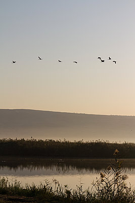 Hula Valley birds at dusk - p1408m1465088 by Guy Nesher