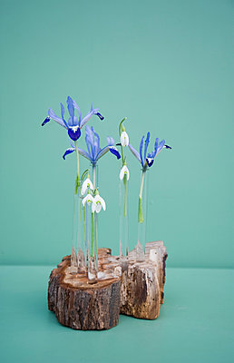 Easter decoration, tree pit and glass tubes with iris and snowdrop - p300m2083275 by Gianna Schade