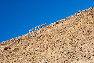 Sinai desert,Sharm el-Sheikh, Egypt - p8160321 by Nina Indset Andersen