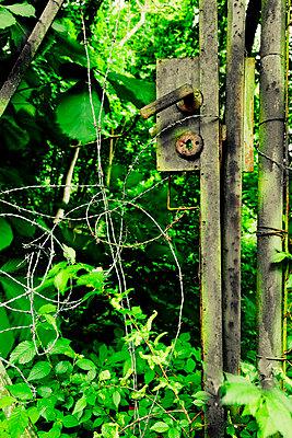 Eingewachsene Gartentür - p248m816000 von BY