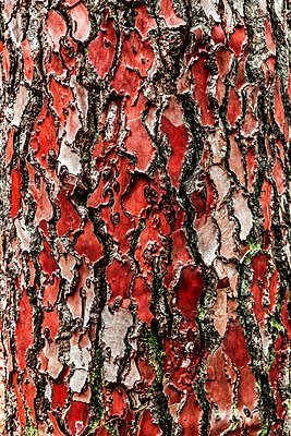 Wood Grain - p248m1104501 by BY