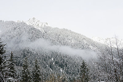 Snow covered trees on mountainside - p9243838f by Image Source