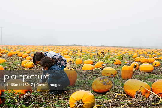 Brothers examining pumpkin at farm during foggy weather - p1166m1416217 by Cavan Images