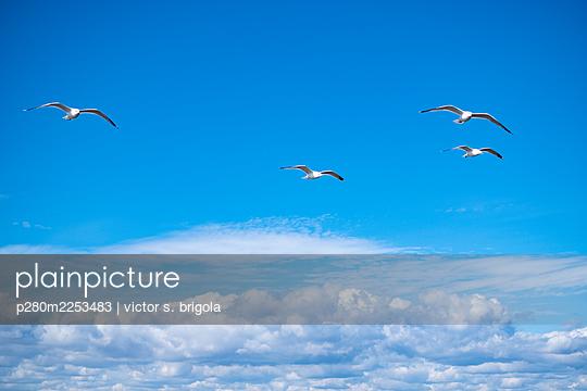 4 Seagulls - p280m2253483 by victor s. brigola