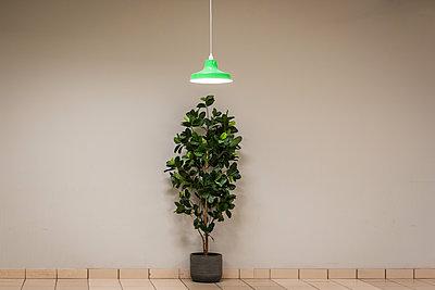 Pflanze und Lampe - p1418m2228522 von Jan Håkan Dahlström