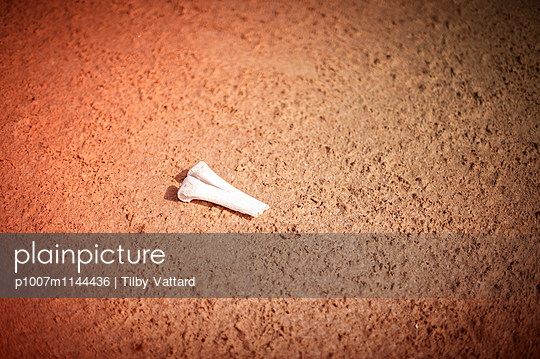 Broken bone in the desert - p1007m1144436 by Tilby Vattard