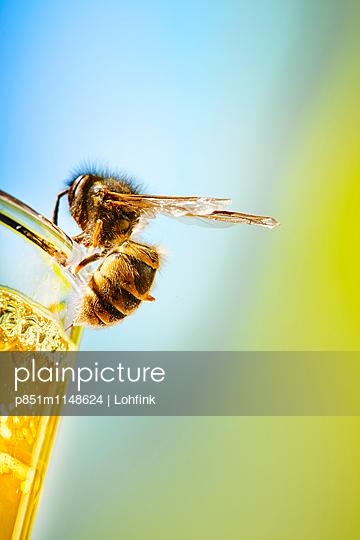 Biene am Bierglas - p851m1148624 von Lohfink