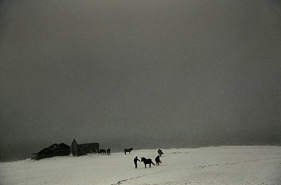 Alone in the storm with horses, Iceland - p1028m1526128 von Jean Marmeisse
