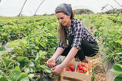 Agriculture work in strawberry field, Huelva, Spain - p300m2286210 von Julio Rodriguez