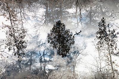 Wald - p417m2077365 von Pat Meise