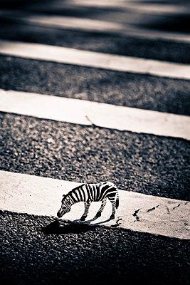 Zebra - p7950158 von Janklein
