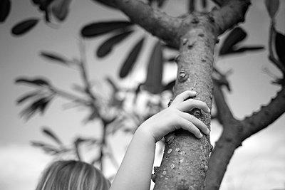 Hand am Baum - p1308m1143583 von felice douglas